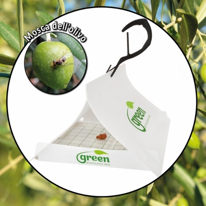 Green Trap - Olive fruit fly